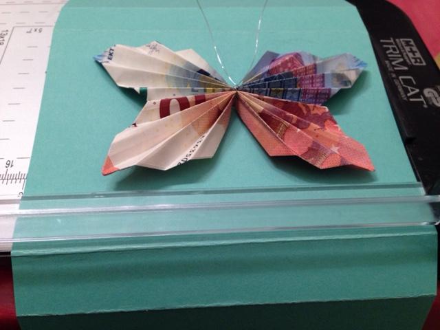 bills butterfly