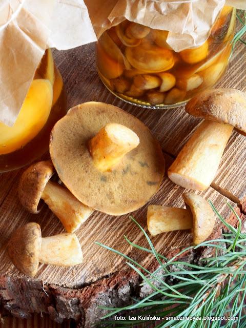 grzyby w occie, grzybki marynowane, maslaki, maslaczki, maslak pstry, miodowka, pociechy, muchowiki, siniaki