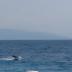 [Ελλάδα]Δελφίνια έφθασαν στα... ρηχά και τρέλαναν με τα παιχνίδια τους τους λουόμενους - ΒΙΝΤΕΟ
