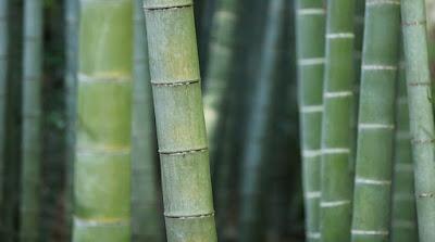 bambu untuk media budidaya kroto