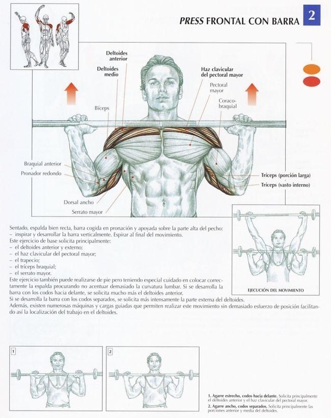 rutina de brazos y hombros
