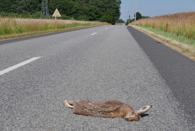 Faune sauvage victime de la route