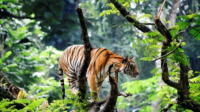 Thekkady - For the love of wildlife