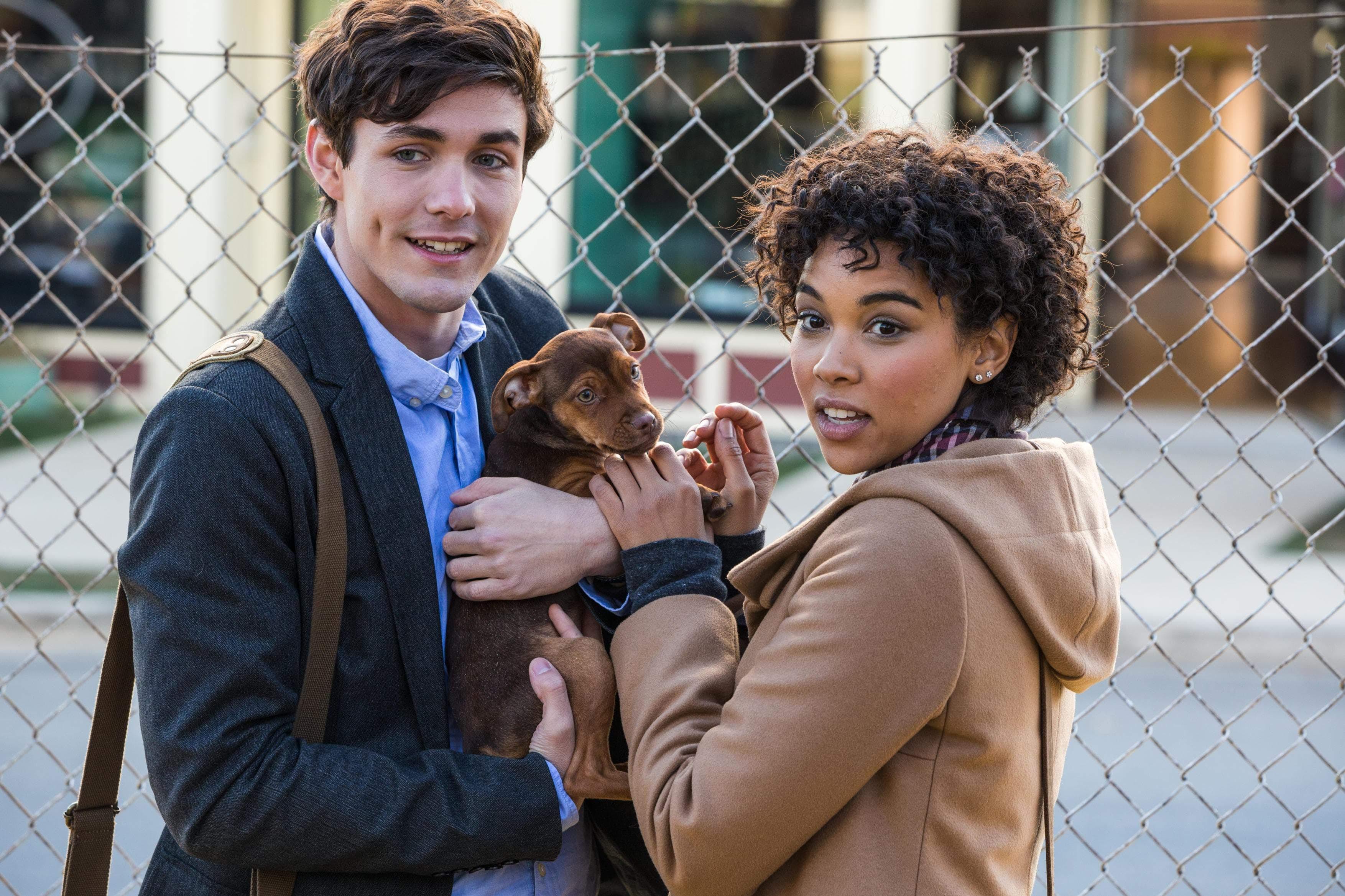 Box Office : 1月11日~13日の全米映画ボックスオフィスTOP5 - 離れ離れになった飼い主との再会を目指し、640キロ以上の道のりを旅する犬の冒険を描いたファミリー映画「ドッグ'ズ・ウェイ・ホーム」が想定通りのヒットの初登場第3位 ! !
