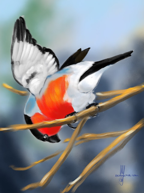 Bullfinch bird painting by Artmagenta