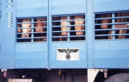 """L'image est une photo qui montre un camion ou un wagon a bestiaux bleu. Derriere les barreaux on aperçoit des bovins, mais juste leur tete, museaux et yeux dont la concentration suggere qu'ils sont entasses. Au milieu du camion ou du wagon, sous les barreaux, il y a un rectangle blanc qui arbore en noir les armoiries du Troisieme Reich, l'etat allemand nazi dirige par Adolf Hitler, c'est a dire l'aigle et la croix gammee, qui sont des emblemes bien connus des nazis. Cette image qui est un montage encore une fois habile du Marginal Magnifique illustre le tres engage et controverse poeme intitule """"Shoanimaux"""" dont le titre est un mot-valise qui en exprime bien le contenu. En effet, dans ce poeme qui defend la cause animale, Le Marginal Magnifique n'hesite pas a assimiler les abattoirs aux camps d'extermination nazis, et, d'un point de vue plus général, tout le processus d'abattage des animaux en vue de leur consommation a la Shoah, le genocide juif entrepris par les allemands nazis durant la seconde guerre mondiale. Ainsi Le Marginal Magnifique met en exergue la similitude des conditions de transport, le caractere industriel, systematique et massif de la mise à mort. Enfin le Marginal Magnifique s'insurge contre le fait que personne ne souligne les atrocités commises chaque jour dans les abattoirs alors que la Shoah est unanimement et universellement reconnue comme une horreur, une abomination, une monstruosite. Le Marginal Magnifique dénonce du coup une fois de plus l'incohérence et l'hypocrisie d'une societe qui n'a que ses apparences de civilisees. Assurement un tres grand texte du Marginal Magnifique !"""
