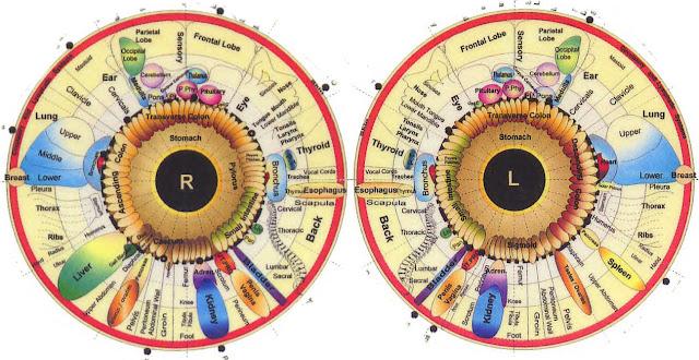 mapa iridología
