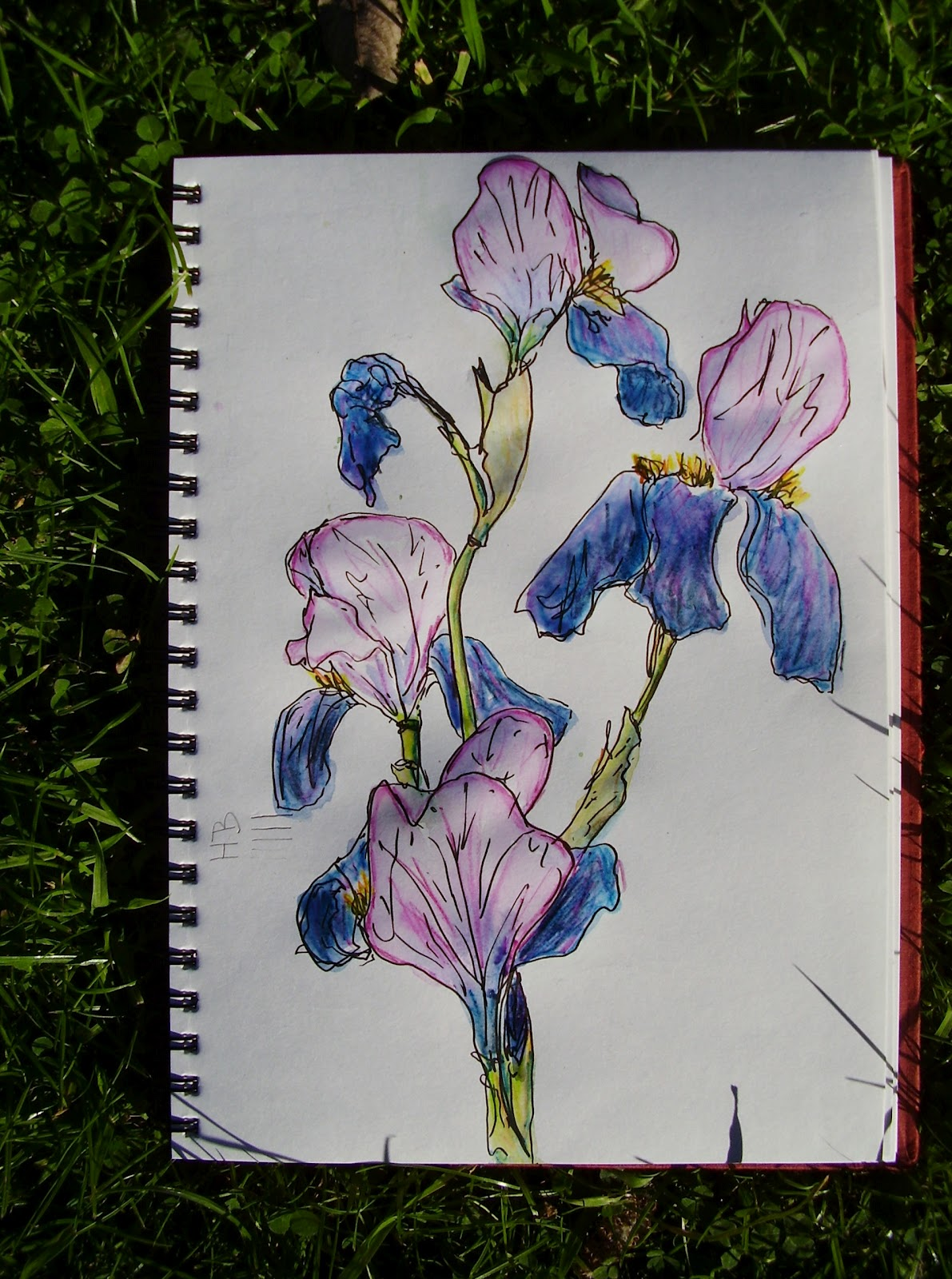 displaying 20 gt images for bearded iris flower drawing