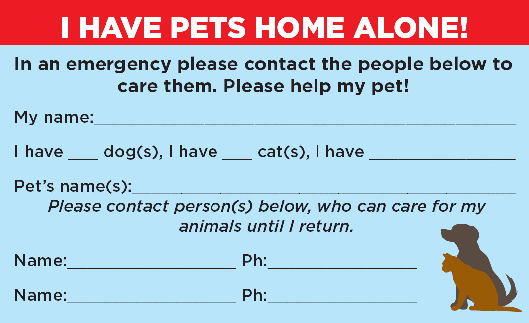 graphic regarding My Dog is Home Alone Card Printable known as Holly the Collie: Animals House By itself