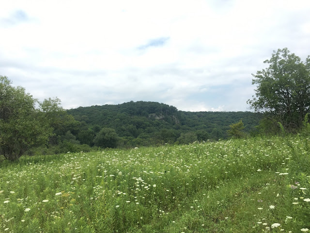 Driftless scenery wisconsin rock outcrop