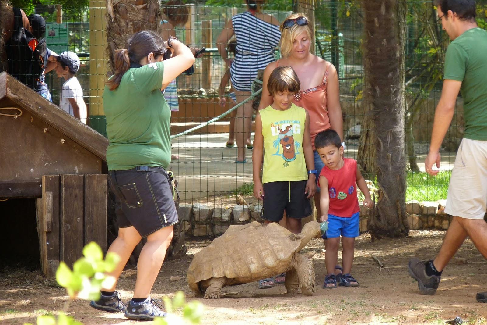 Krazy World, Joel alimentando a la gran tortuga.