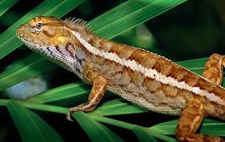Pengertian Reptilia, Ciri - Ciri, Ordo, Dan Contohnya