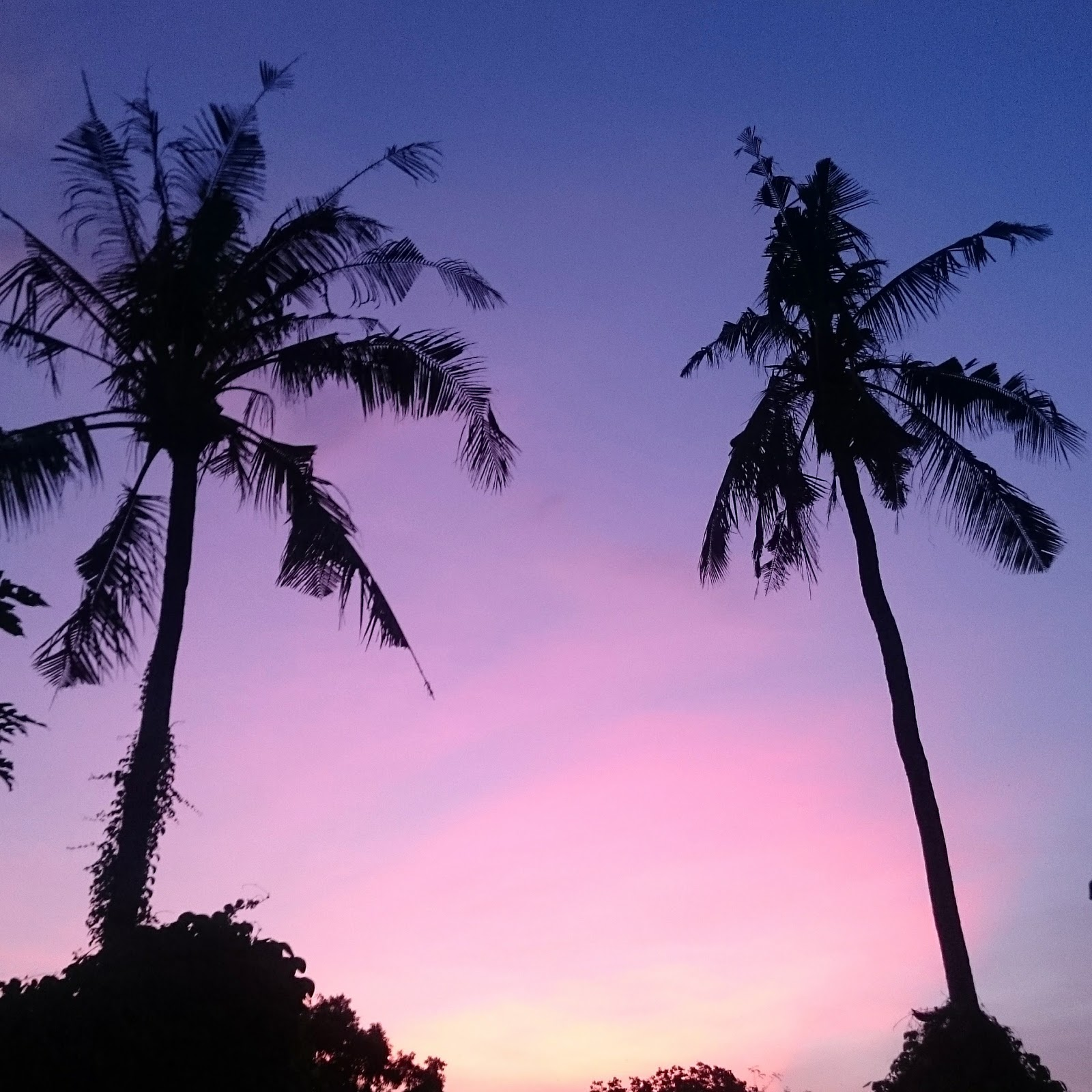 Palm trees at sunset in Bali