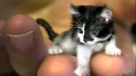 Αυτή είναι η μικρότερη γάτα που υπάρχει στον κόσμο – Χωράει στην παλάμη ενός χεριού (βίντεο)