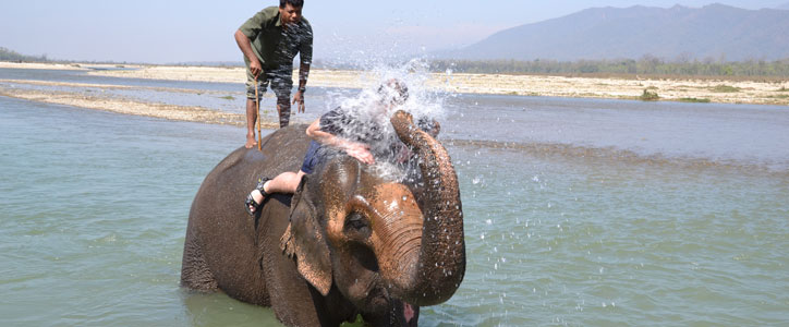 Elephant bathing in Chitwan