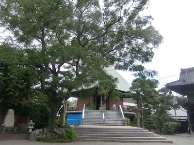 本覚寺のセンダン