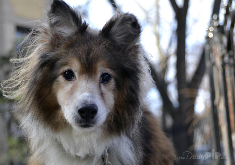 Adopting and rehabilitating an abandoned dog