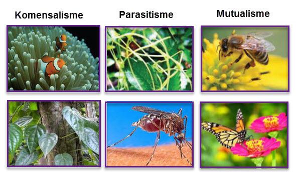 Simbiosis Pada Makhluk Hidup