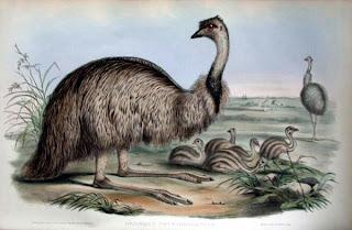 Australian Emu Oil