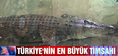 İstanbul'da sualtı hayvanat bahçesinde