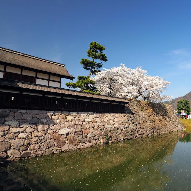 松代城跡 桜