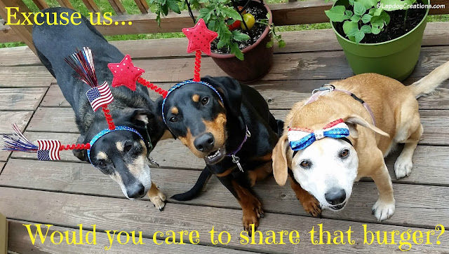 dogs wearing red white and blue headbands
