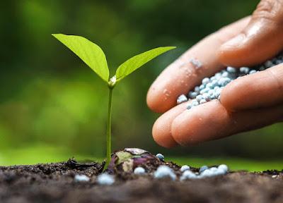 Jasa Tukang taman surabaya cara Pupuk tanaman