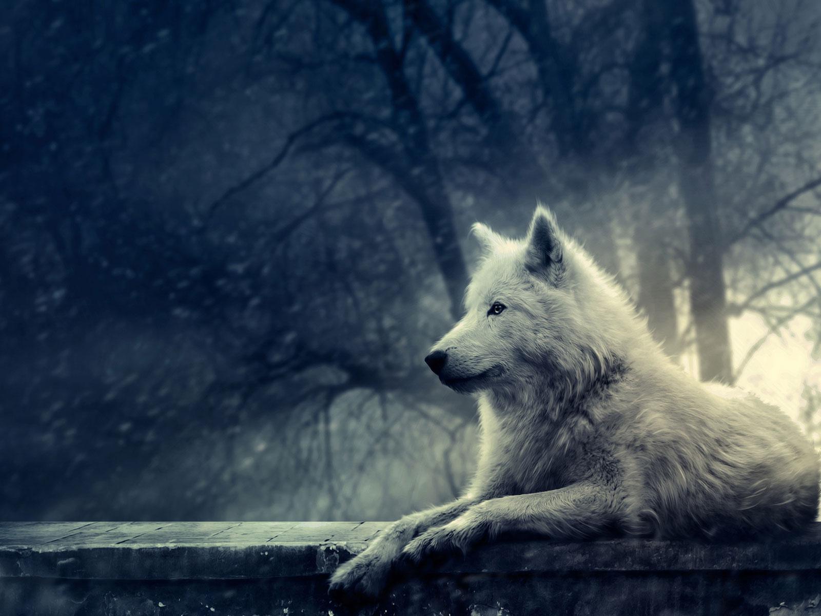 Foto dan Wallpaper Serigala Ukuran Besar