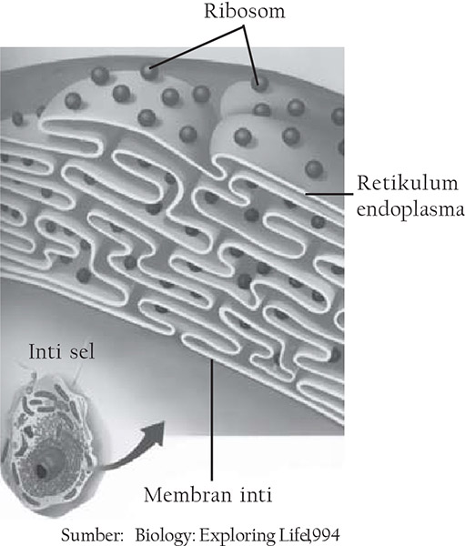 gambar ribosom