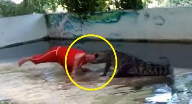 تمساح يسحق رأس حارس الحديقة امام الجمهور ليس لأصحاب القلوب الضعيفة