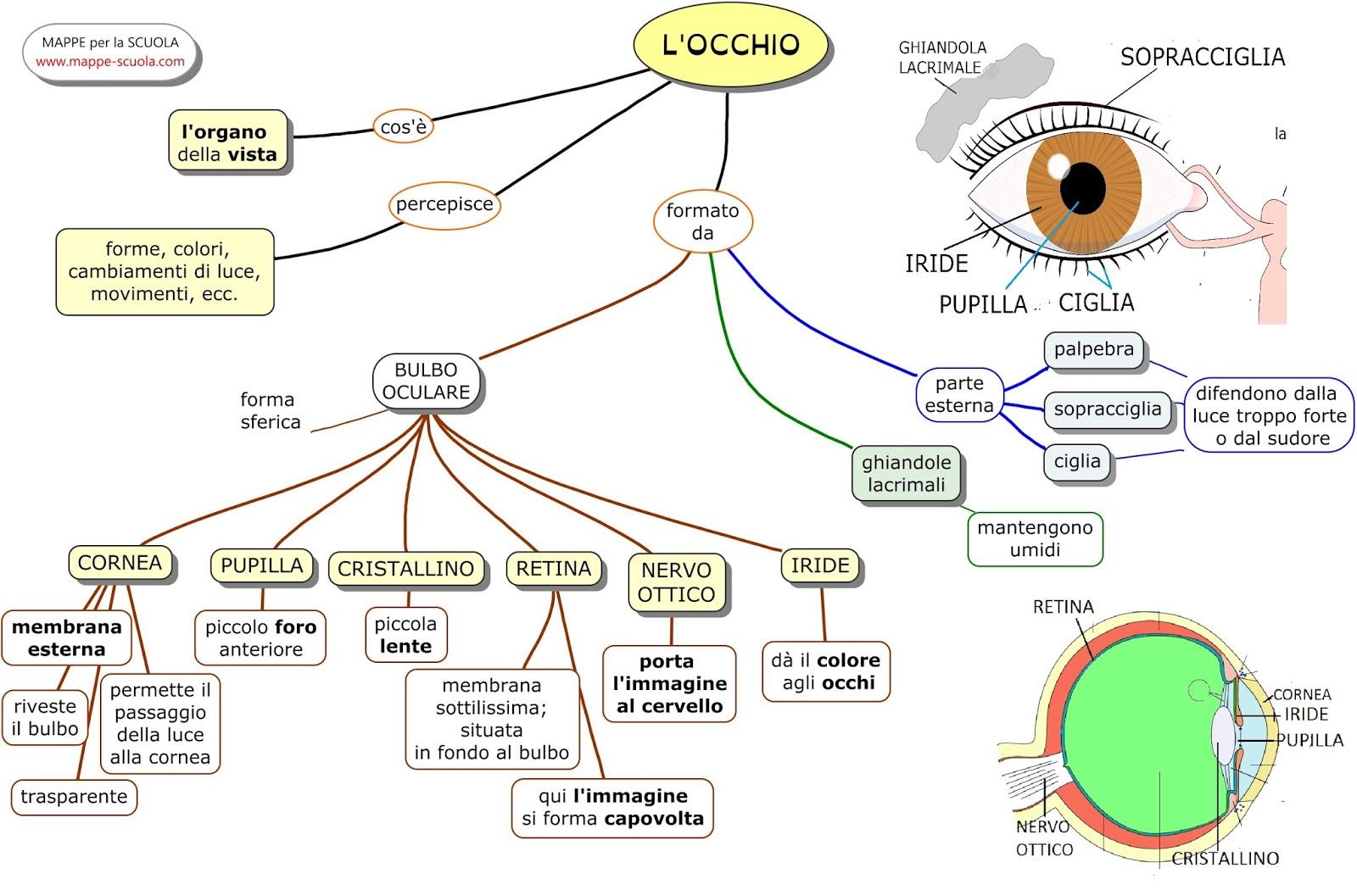 Come funzionano l'occhio e la vista - Focus Junior