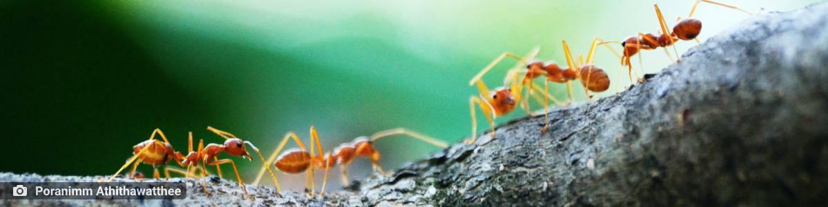 ambiente de leitura carlos romero clovis roberto medo animais cobra marimbondo formigas