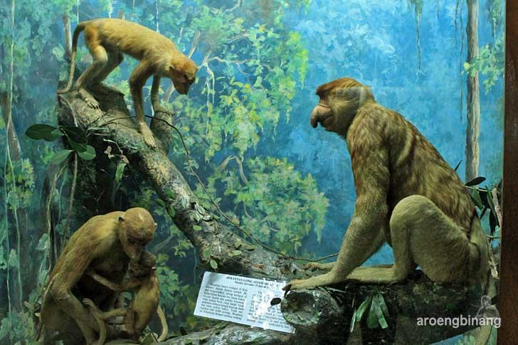 bekantan museum zoologi bogor