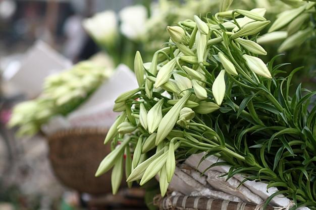 Hình ảnh hoa đẹp - Hoa loa kèn 05
