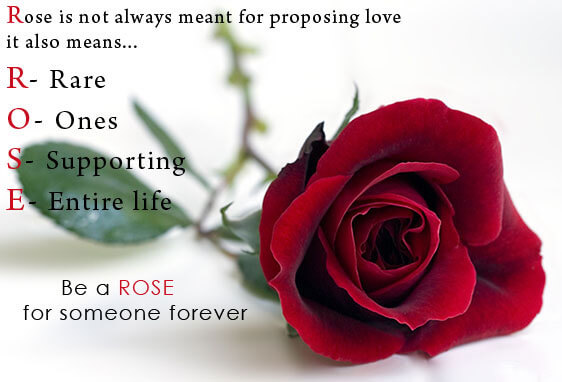 rose day wishes rose day happy rose day rose day message rose day quotes rose day 2017 rose day image valentines day rose day valentine rose day happy rose day quotes 7 february rose day rose day date rose day wallpaper rose day special