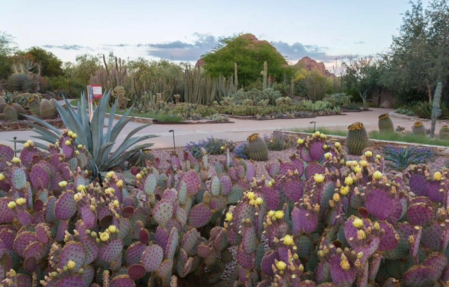 Arizona Families Free Admission At Desert Botanical Garden Phoenix
