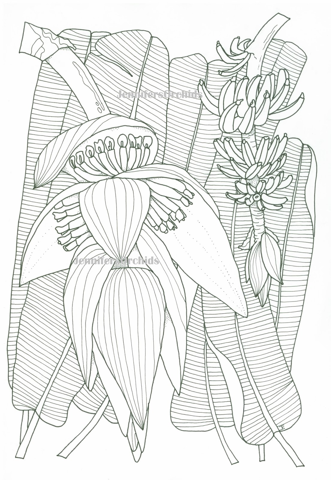 Kleurplaten Natuur Bloemen.Schilderijen Van Orchideeen Andere Botanische Werken Kleuren Voor
