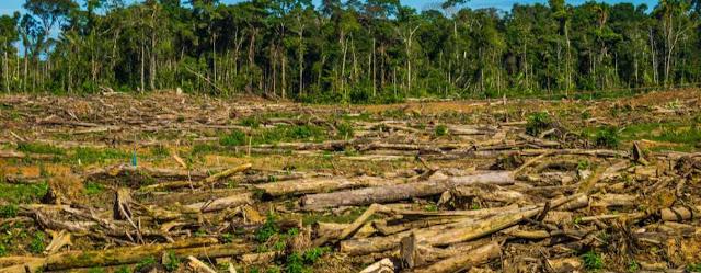 Deforestacion en el Amazonas
