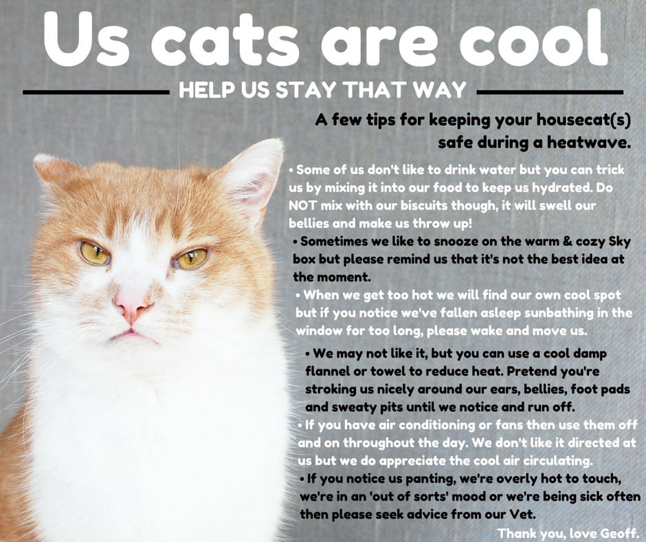 Cat Lady Club: How To Keep Your House Cat Cool During A