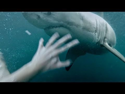 GoPro Man Fights Off Great White Shark In Sydney Harbour