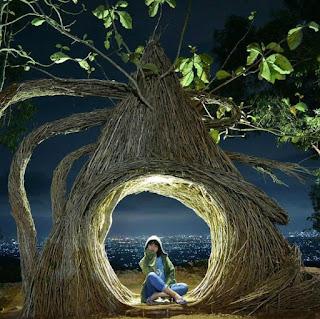 Spot-Foto-Pinus-Pengger