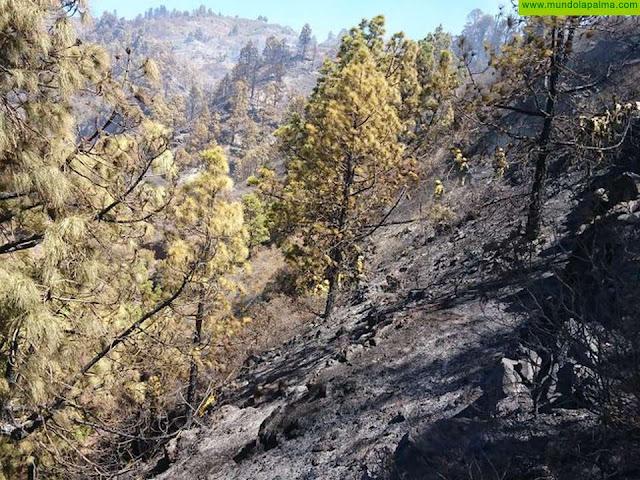 El incendio de La Palma está estabilizado, pero no controlado, y continúa en nivel 2 bajo la dirección del Gobierno