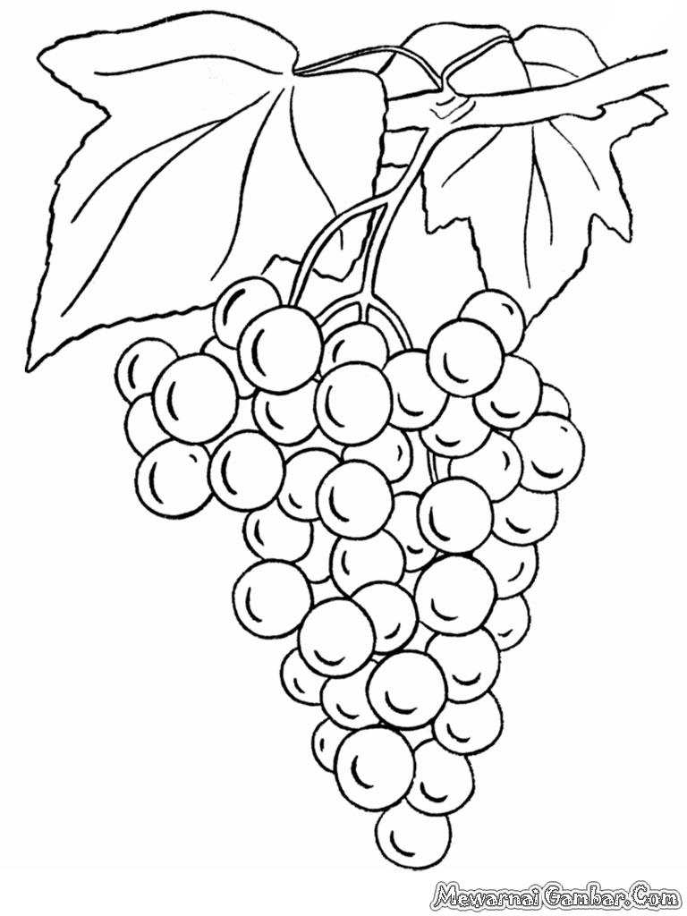 78 Gambar Arsiran Anggur Kekinian