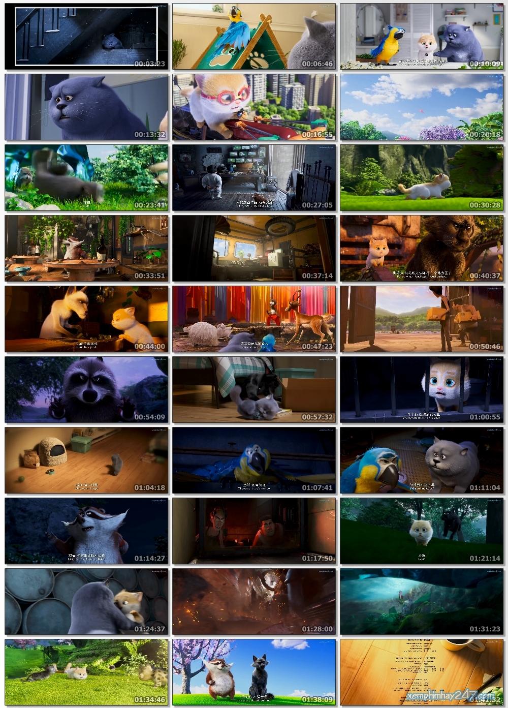 http://xemphimhay247.com - Xem phim hay 247 - Mèo Mập Đi Phượt (2018) - Cats And Peachtopia (2018)