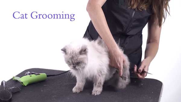 cat grooming at home