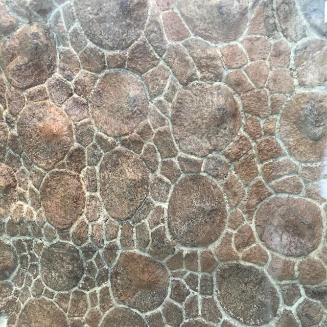 Venture & Roam: fossils, dinosaur armour