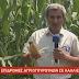 [Ελλάδα]Επιδρομή αγριογούρουνων στην Καλαμπάκα (video)