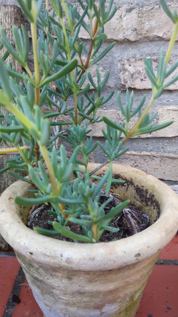 http://angelagcabrera.blogspot.com.es/