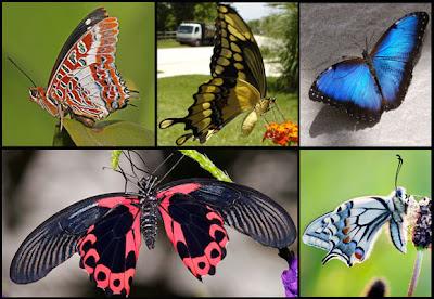 أجمل صور الفراشات في العالم   صور لم تشاهدها من قبل