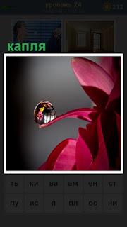 небольшая прозрачная капля упала на цветок красного цвета